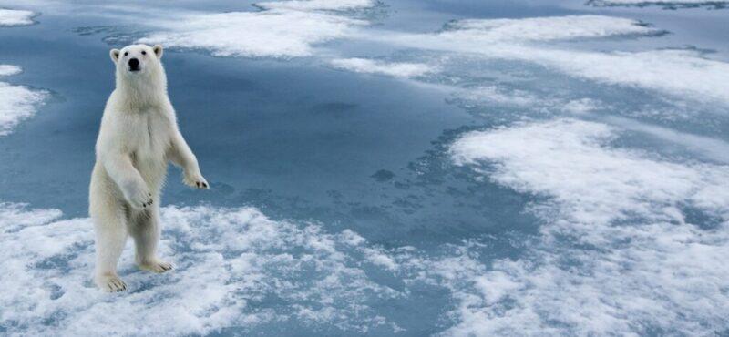Image of polar bear on ice