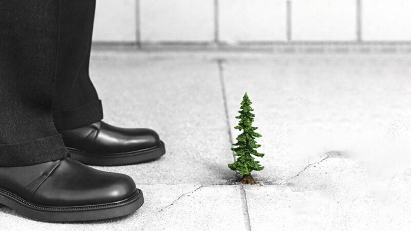 Feet of businessman in front of tiny tree growing out of crack in sidewalk