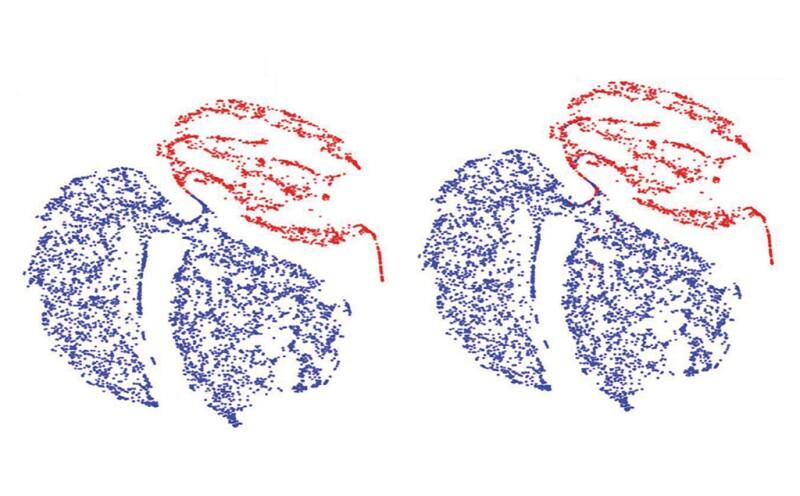 t-SNE representation